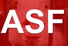 Komentarz związany z opracowaniem szczepionki na wirusa ASF