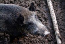 Zakaz polowań to cios w bezpieczeństwo żywnościowe kraju